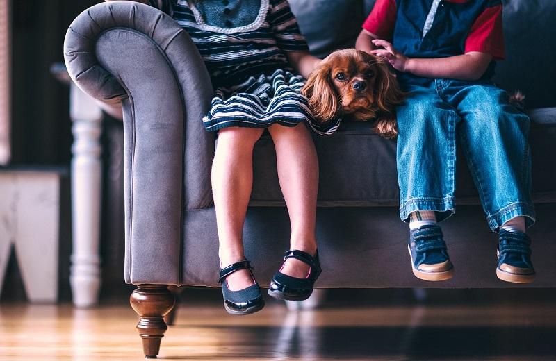 Varnost otrok in hišnih ljubljenčkov pri selitvah v novo domovanje